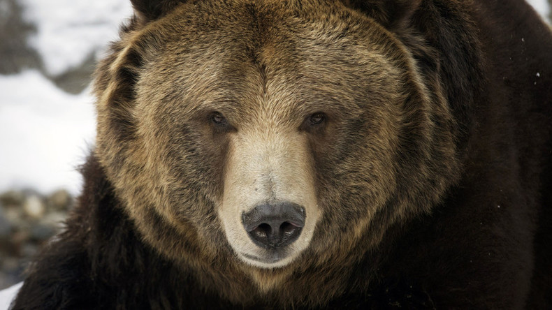 Beauty queen butcher: Ex-Miss Kansas charged with killing too many grizzly bears