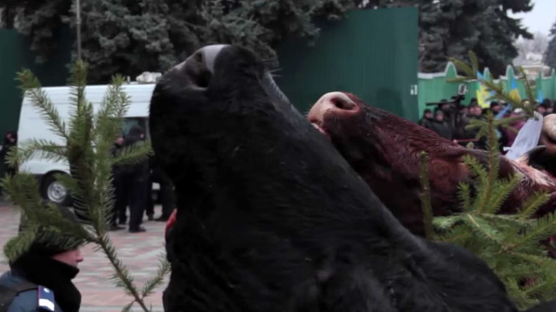 Cow heads hang on Xmas trees in Kiev as protesters descend on parliament (GRAPHIC VIDEO)