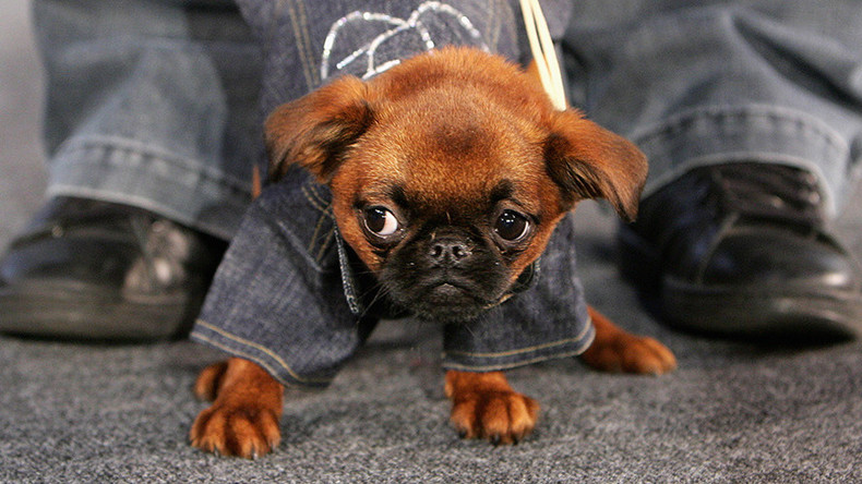 Wag the dog: Twitter in heat over dog pants poll