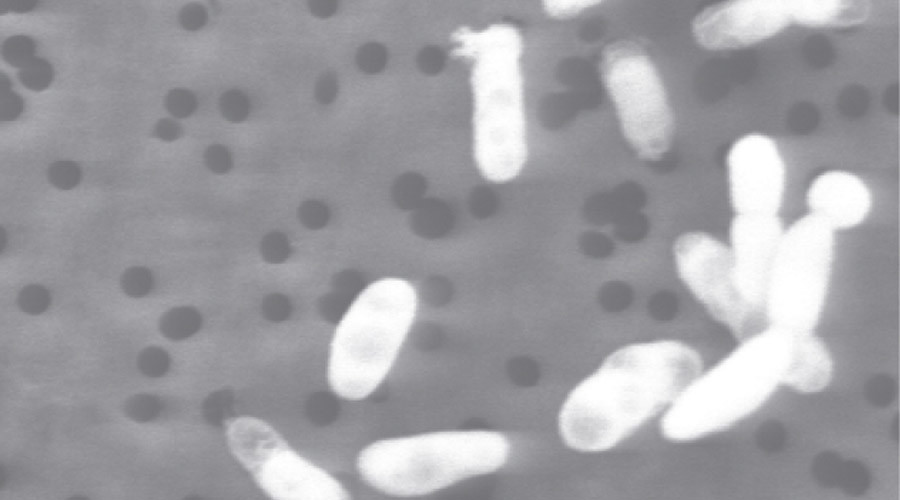 'Almost too late' to halt spread of antibiotic resistant bacteria found in pigs – scientists