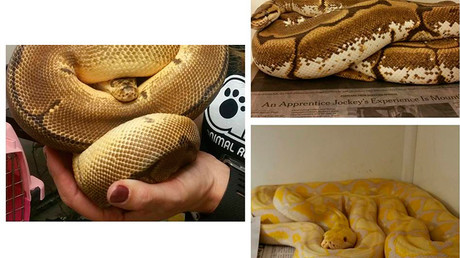 Animal control rescues more than 60 snakes from Maryland apartment