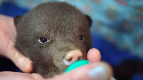 Russian rescue center uses unique caring method to save abandoned bear cubs
