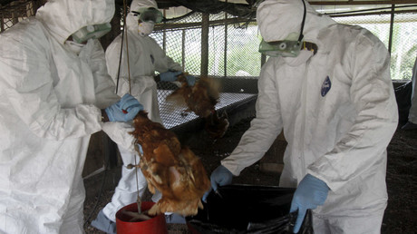 New bird flu outbreak: More than 60 farms in France infected