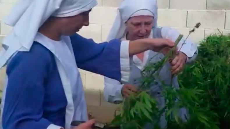 Sister Act-ivists: Cannabis-growing 'nuns' campaign to save their crop