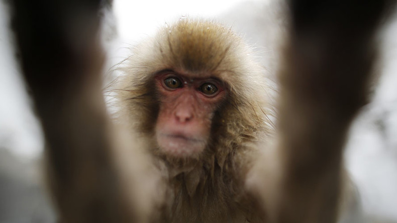 Selfie copyright claim: Monkey loses