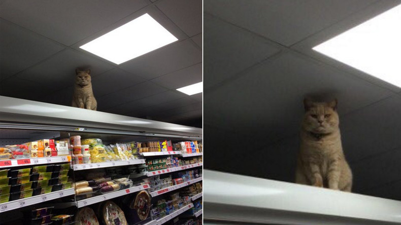 Top Cat: Feisty feline from UK supermarket becomes new internet celebrity