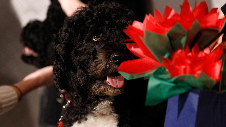 Secret Service foils plans to kidnap Obama's dogs by man claiming to be Jesus