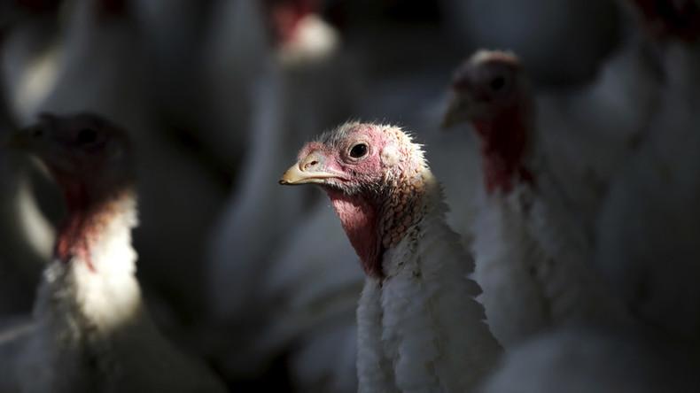 Fowl play: Turkey spotted on board flight freaks internet