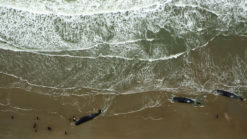 12 beached sperm whales die in week of carnage on northern European coast