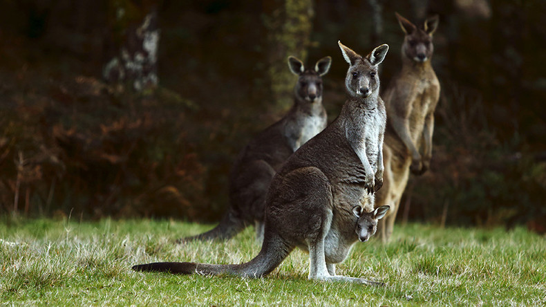 Australian teen accused of Anzac Day terror plot with 'kangaroo bomb'