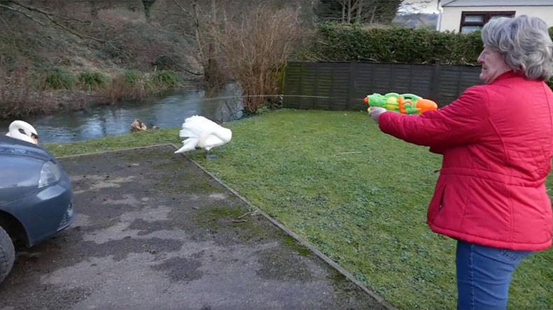Angry birds: Brits fend off swans with water pistols, walking sticks