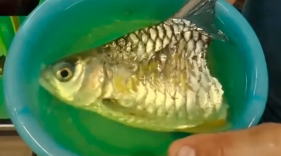 Clickbait: Freaky half-fish survives six months with no trunk or tail (VIDEO)