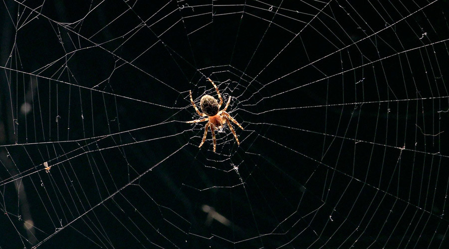 George Orweb: Spiders blamed for blocking CCTV cameras