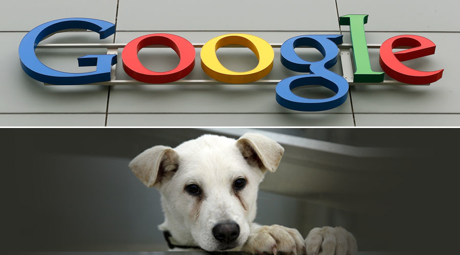 #WoofWoofWednesday! Google UK leaves dog in charge of Twitter account