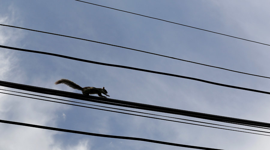 War on squirrels: Website aims to expose power outage culprits