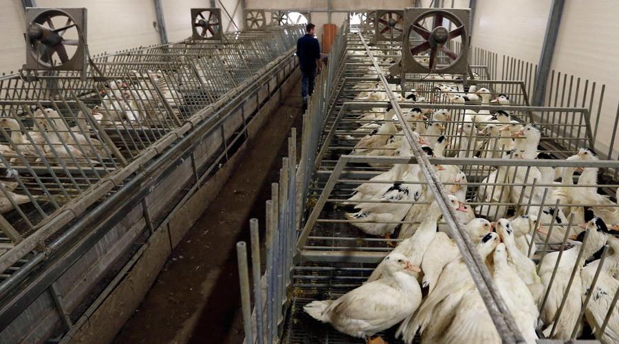 Bird flu outbreak recorded outside restriction zone in France
