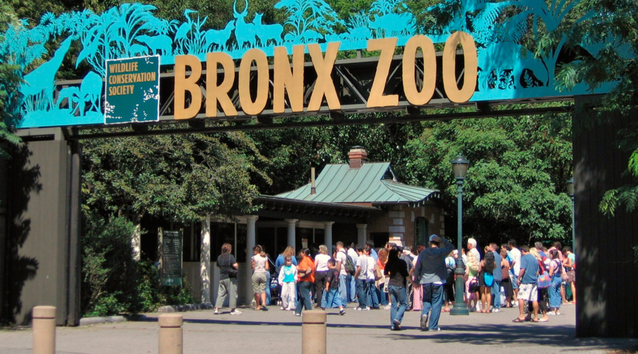 Never forget: Bronx Zoo criticized for treatment of elephants