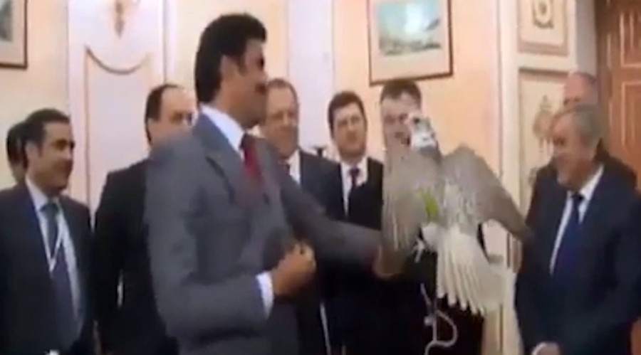 Feather diplomacy: Putin gifts falcon to visiting Emir of Qatar (VIDEO)