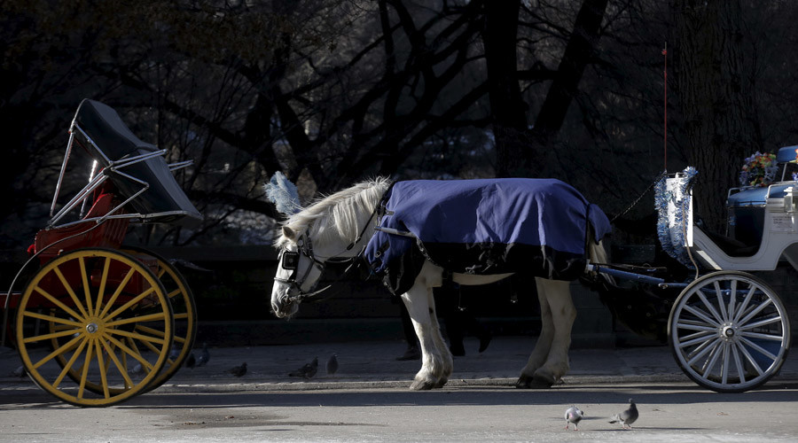 Horses yes, pedicabs no in heart of NYC's Central Park