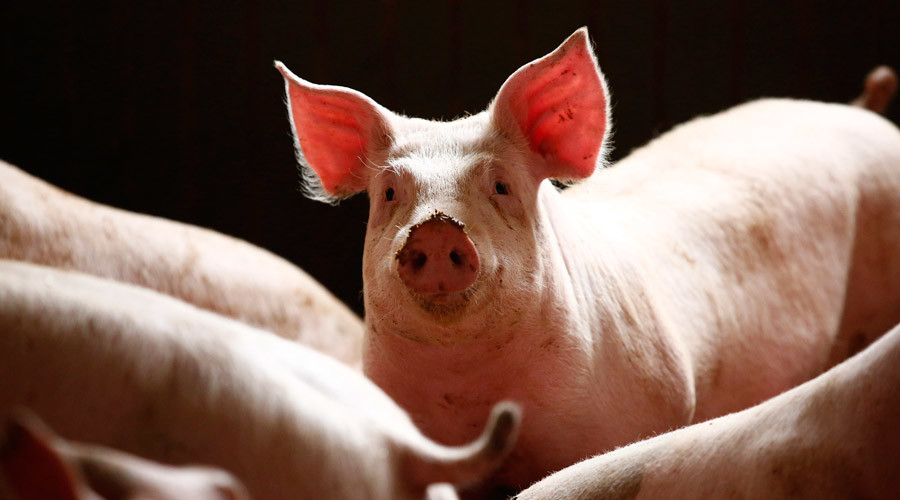 Denmark rules to keep pork on the menu after banishment from Muslim-friendly institutions