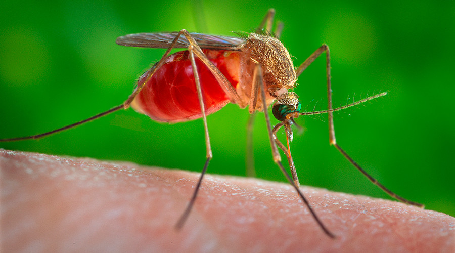 Over a dozen cases of birth defect-causing Zika virus confirmed in 5 states