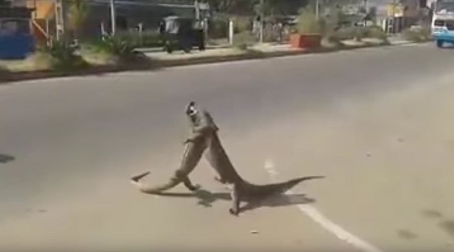 Leaping lizards! Epic reptile battle caught on video