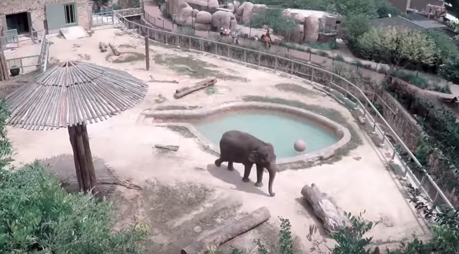 Free Lucky…kill Lucky? Endangered elephant's life hangs in balance as animal group sues zoo