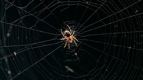 George Orweb: Spiders blamed for blocking CCTV cameras