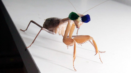 Bug eyed! Insects proven to hunt with 3D vision