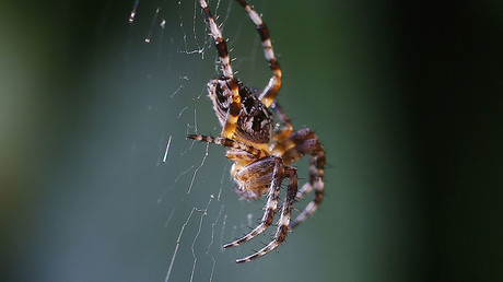 Arachnophobes beware: Scientists discover 'behemoth' spider