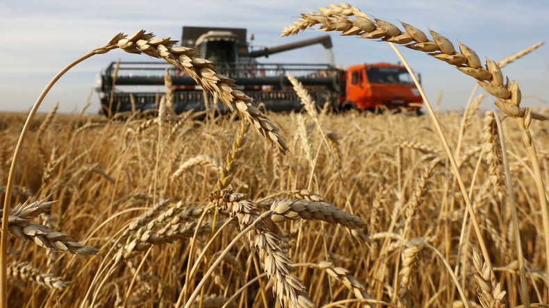 Russia to become world's largest wheat exporter in 2016