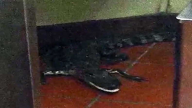 Croc-shock: Florida man arrested for throwing alligator through Wendy's window