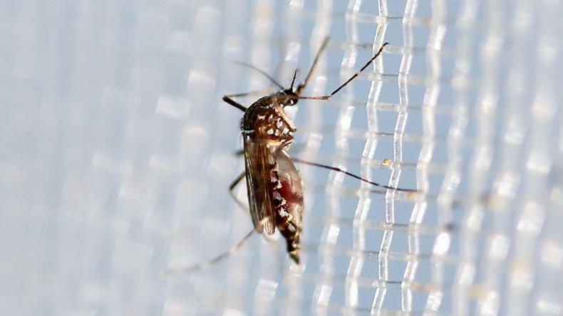 WHO backs GM mosquitoes & bacteria to fight Zika virus