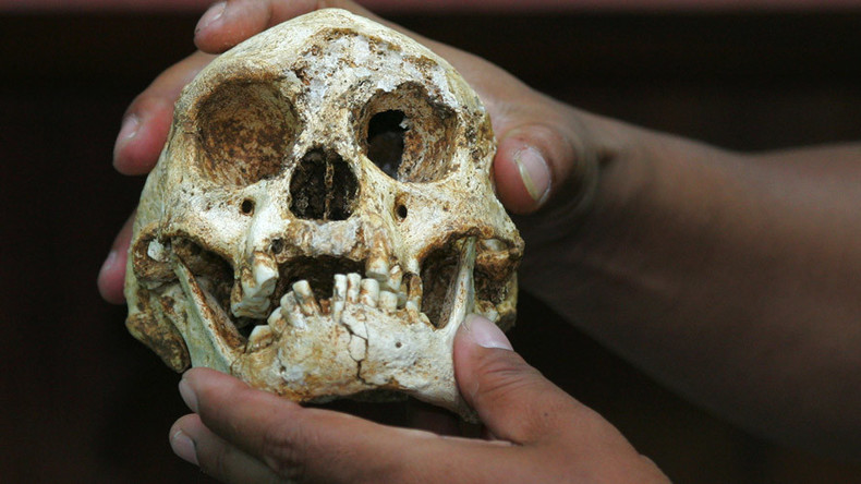 Prehistoric 'hobbits' were not deformed humans, but another species – study