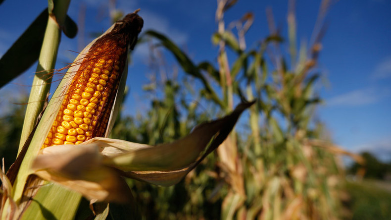 Journal Retracts Research Linking GM Corn With Cancer In