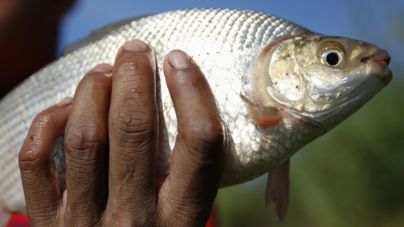Gills and pills: Fish testing positive for cocaine, anti-depressants