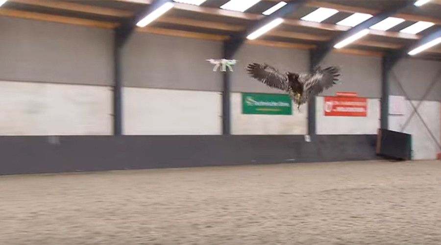 Hawking for drones: Dutch police train raptors to take down UAVs