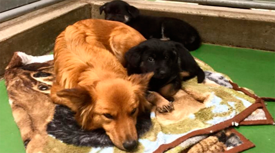 Dog breaks out of kennel - and the reason will touch your heart