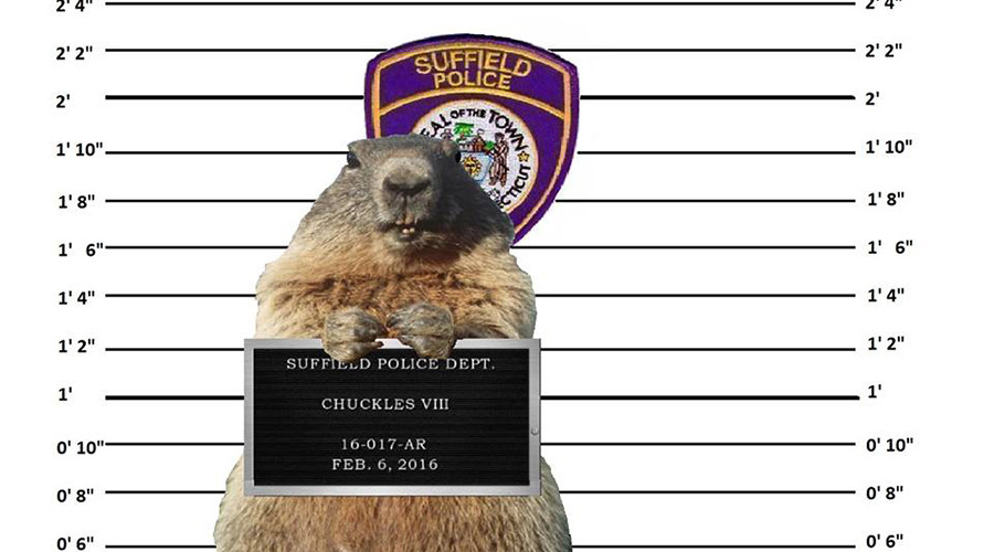 Police 'arrest' groundhog for 'fraud' after predicting early spring