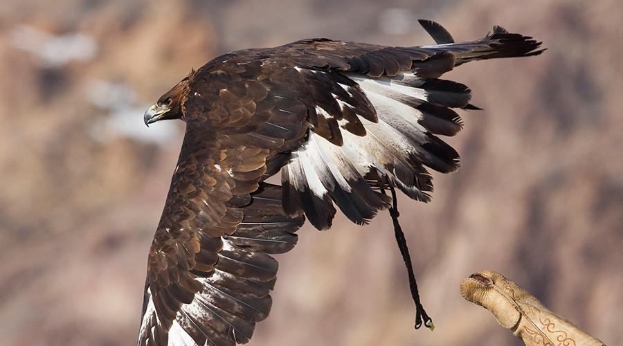 Scotland Yard mulls deploying eagles against hostile drones in London skies