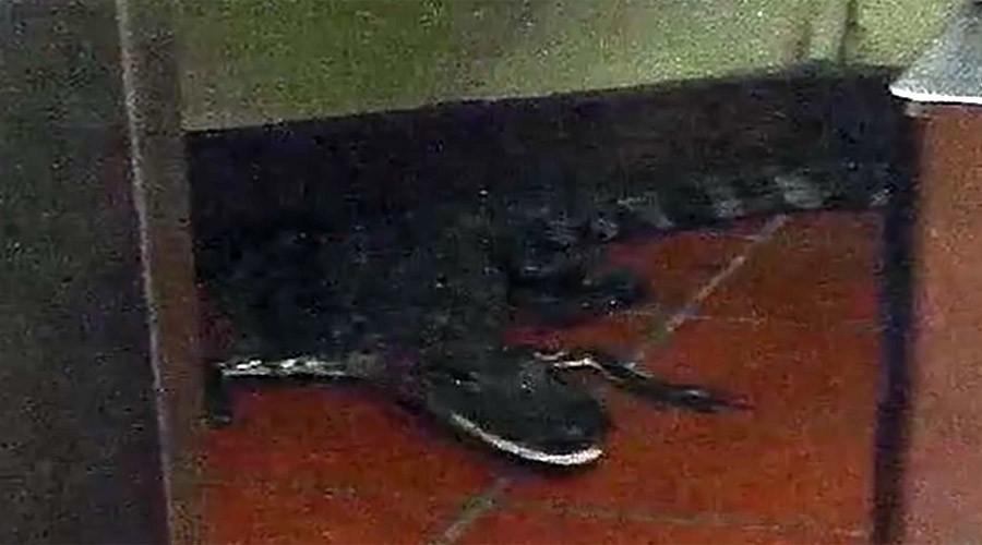 Croc-shock: Florida man arrested for throwing alligator through Wendy's window