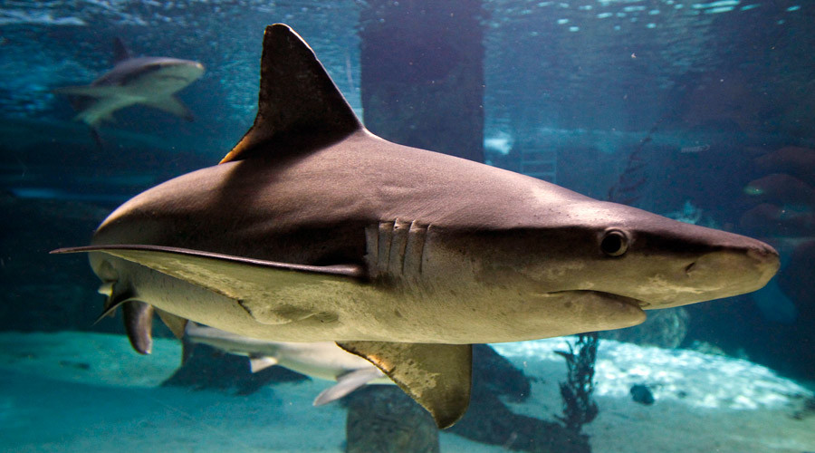 Shark attacks reach record high in 2015 – majority take place in US