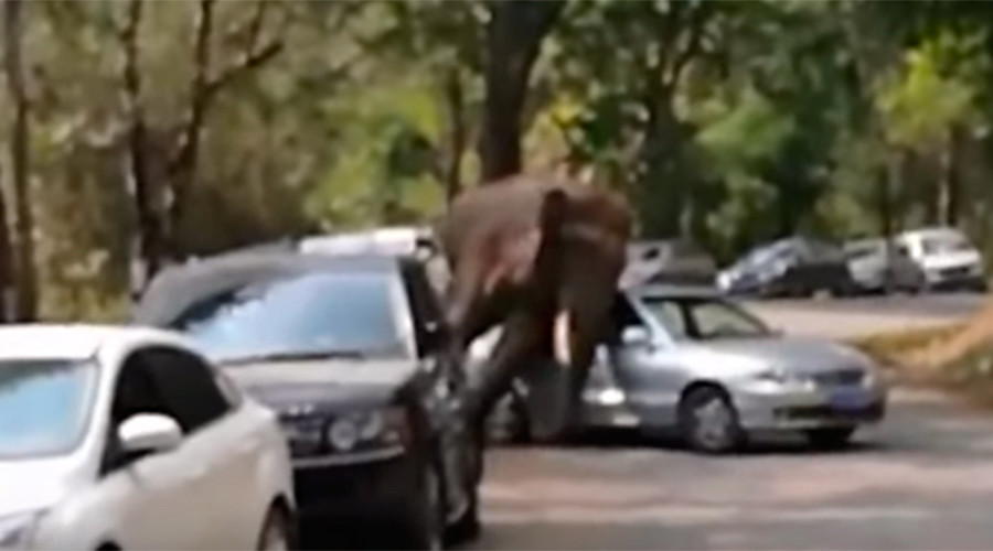 Lovelorn elephant smashes cars after getting dumped (VIDEO)