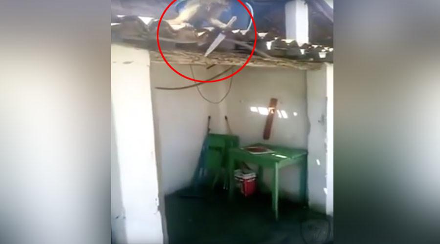 'I think you've had enough': Knife-wielding drunk monkey terrorizes Brazilian bar (VIDEO)
