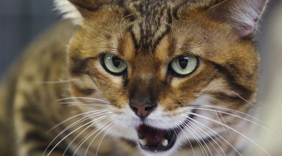 Moscow police hunt 'cat wearing plastic explosives belt'