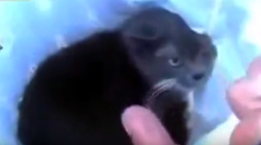 Shocking video of cat blown up with firecracker prompts arrests of 3 Russian men