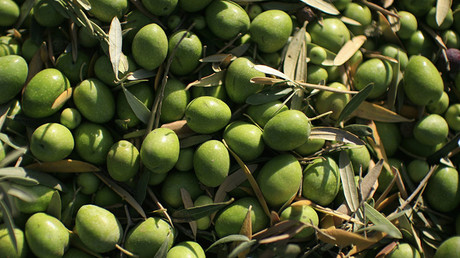 Going green? 85,000 tons of chemical-brightened olives seized in Italy