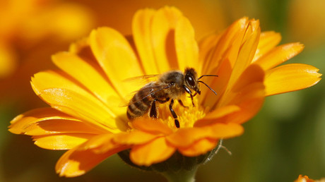 Major pesticide brand dropping bee-killing chemical
