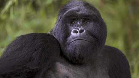 Apes evolved from 'cursed Jews'? Turkish columnist in outlandish attempt to reverse Darwinism