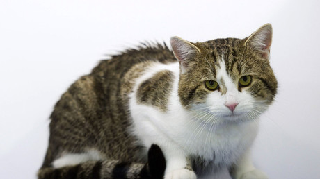 Man arrested for decapitating 5 cats, but 'Croydon cat killer' may still be at large
